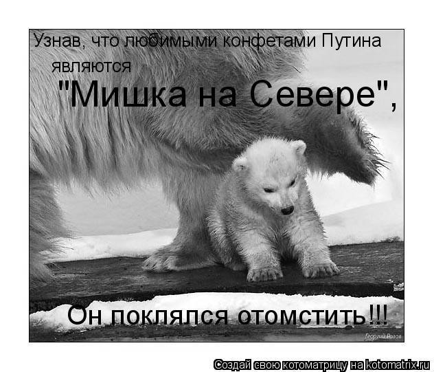 """Котоматрица: Узнав, что любимыми конфетами Путина  являются  """"Мишка на Севере"""",  Он поклялся отомстить!!!"""