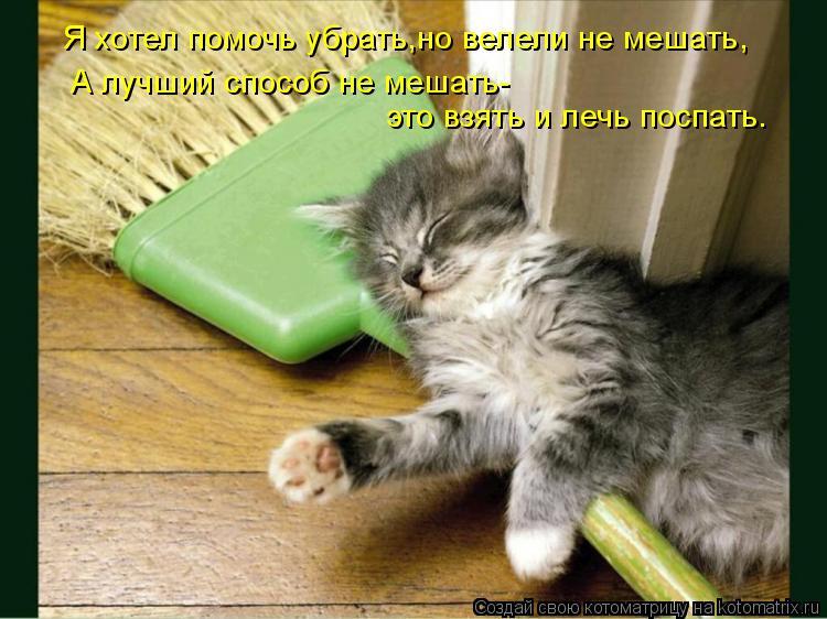 Котоматрица: Я хотел помочь убрать,но велели не мешать, А лучший способ не мешать- это взять и лечь поспать.
