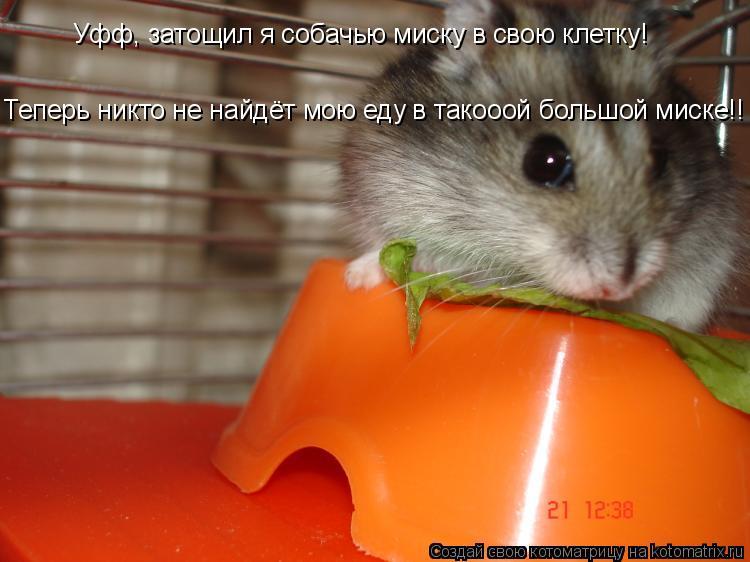 Котоматрица: Уфф, затощил я собачью миску в свою клетку! Теперь никто не найдёт мою еду в такооой большой миске!!