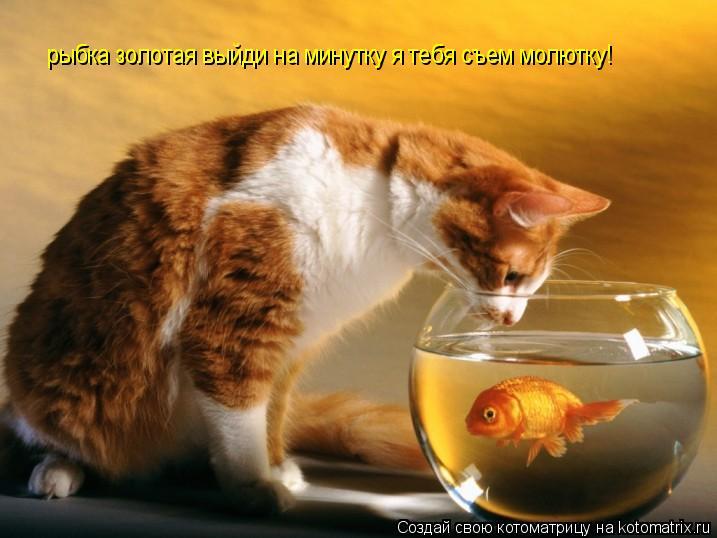 Котоматрица: рыбка золотая выйди на минутку я тебя съем молютку!