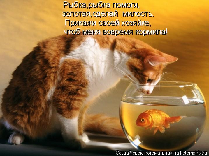 Котоматрица: Рыбка,рыбка помоги, золотая,сделай  милость. Прикажи своей хозяйке, чтоб меня вовремя кормила!
