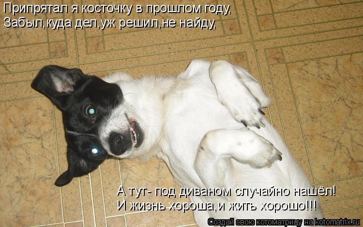 Котоматрица: Припрятал я косточку в прошлом году, Забыл,куда дел,уж решил,не найду, А тут- под диваном случайно нашёл! И жизнь хороша,и жить хорошо!!!