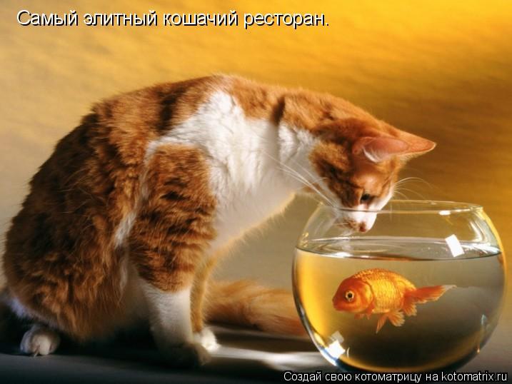Котоматрица: Самый элитный кошачий ресторан.