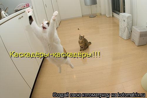 Котоматрица: Каскадёры-каскадёры!!!