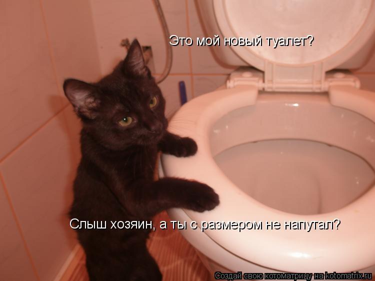 Котоматрица: Это мой новый туалет? Слыш хозяин, а ты с размером не напутал?