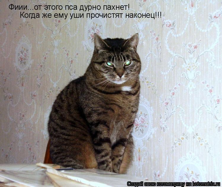 Котоматрица: Фиии...от этого пса дурно пахнет! Когда же ему уши прочистят наконец!!!