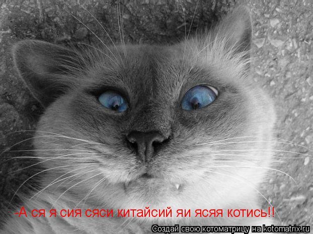 Котоматрица: -А ся я сия сяси китайсий яи ясяя котись!!
