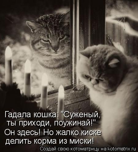 """Котоматрица: Он здесь! Но жалко киске делить корма из миски.  делить корма из миски! Он здесь! Но жалко киске  ты приходи, поужинай!"""" Гадала кошка: """"Суженый,"""