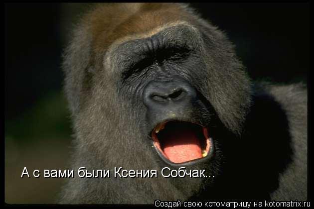 Котоматрица: А с вами были Ксения Собчак...
