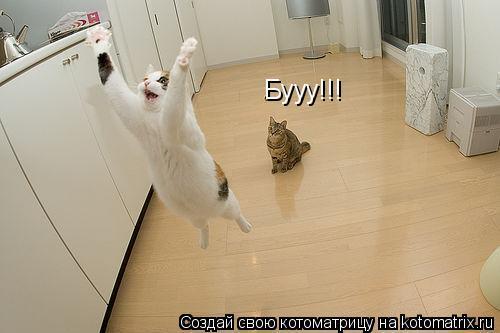 Котоматрица: Бууу!!!