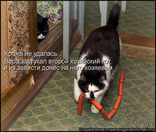 Котоматрица: Кража не удалась... Кража не удалась... Вора застукал второй хозяйский кот, и из зависти донёс на него хозяевам.