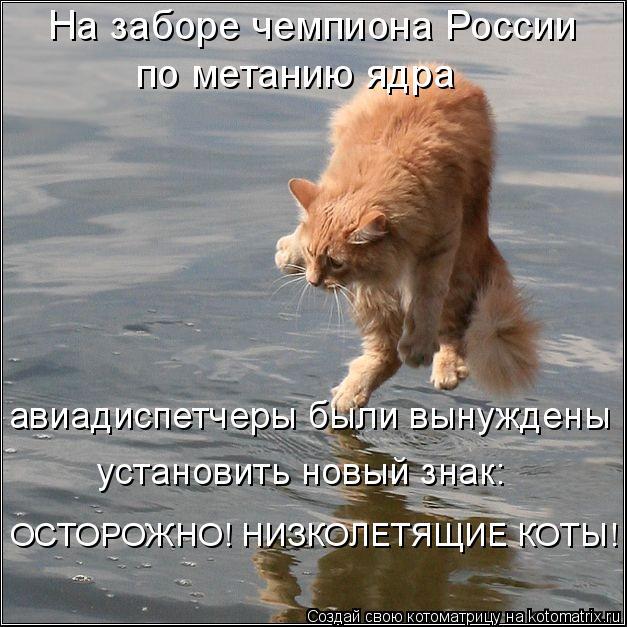 Котоматрица: На заборе чемпиона России  по метанию ядра авиадиспетчеры были вынуждены установить новый знак: ОСТОРОЖНО! НИЗКОЛЕТЯЩИЕ КОТЫ!