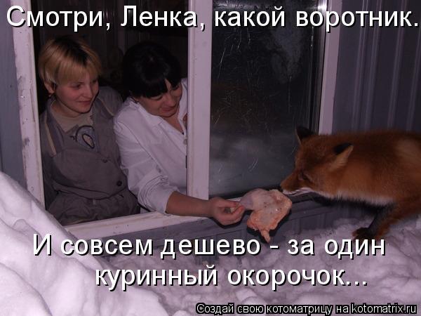 Котоматрица: Смотри, Ленка, какой воротник... И совсем дешево - за один  куринный окорочок...