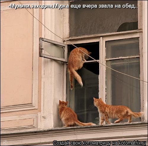 Котоматрица: -Мужики,заходим,Мурка еще вчера звала на обед..