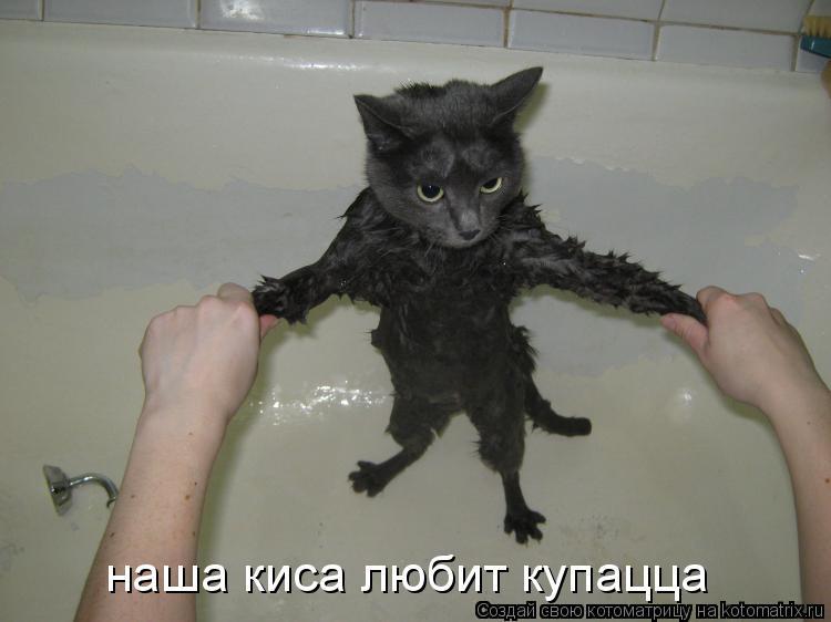 Котоматрица: наша киса любит купацца