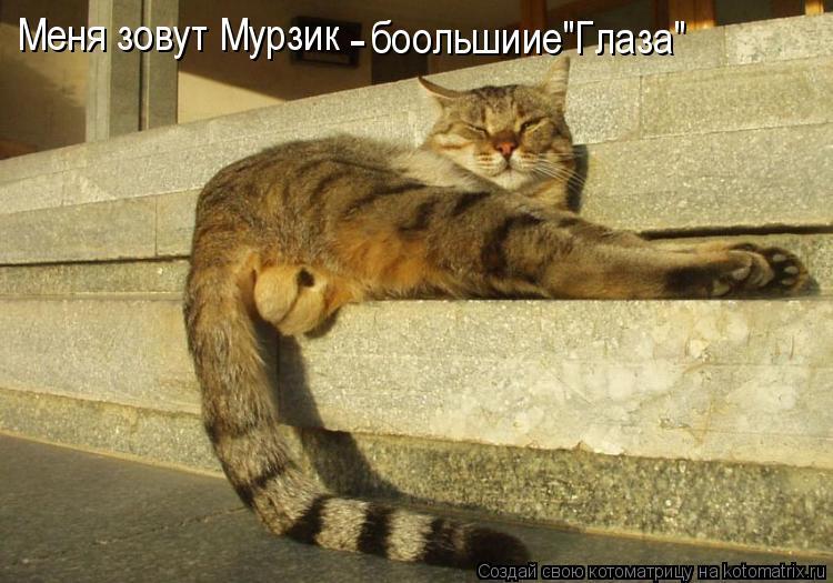 """Котоматрица: Меня зовут Мурзик - боольшиие""""Глаза"""""""