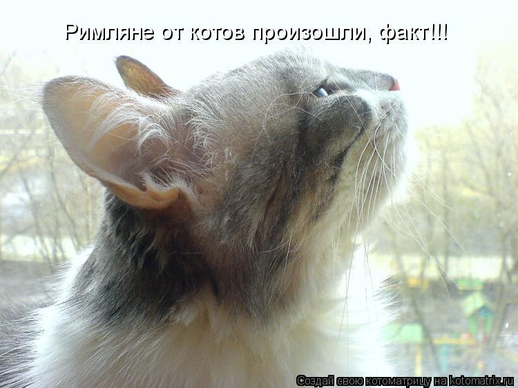 Котоматрица: Римляне от котов произошли, факт!!!