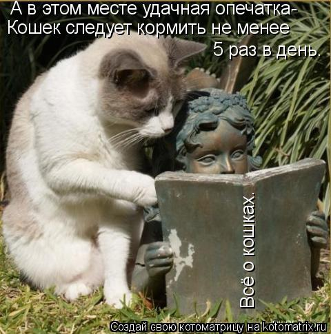 Котоматрица: А в этом месте удачная опечатка- Кошек следует кормить не менее         5 раз в день. Всё о кошках.