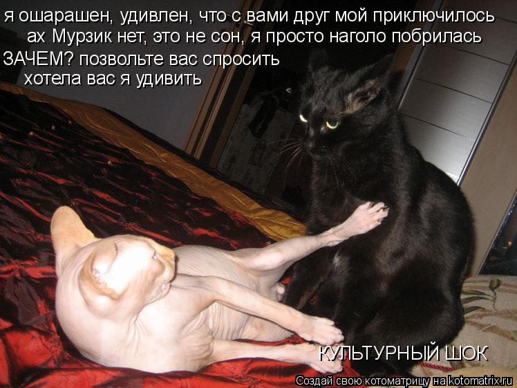 Котоматрица: я ошарашен, удивлен, что с вами друг мой приключилось ах Мурзик нет, это не сон, я просто наголо побрилась ЗАЧЕМ? позвольте вас спросить хоте