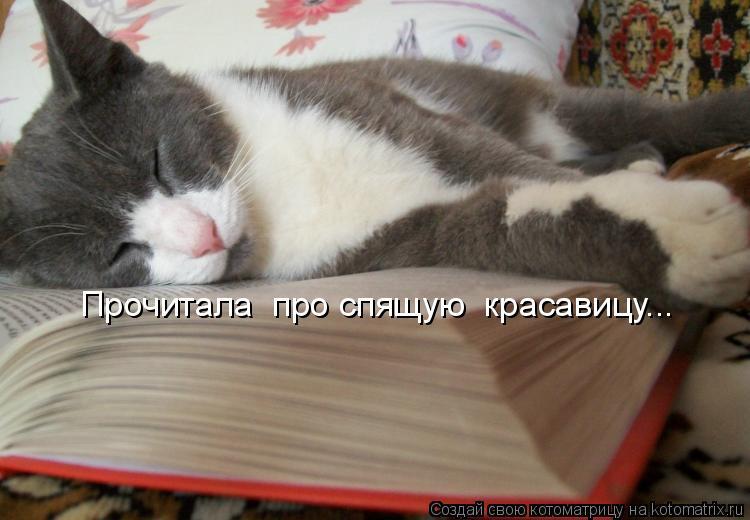 Котоматрица: Прочитала  про спящую  красавицу...