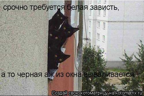 Котоматрица: срочно требуется белая зависть, а то черная аж из окна вываливается..