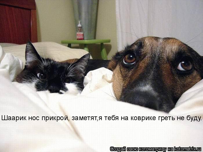Котоматрица: Шаарик нос прикрой, заметят,я тебя на коврике греть не буду.