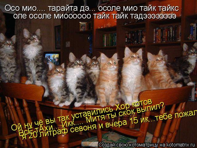 Котоматрица: Осо мио.... тарайта дэ... осоле мио тайк тайкс оле осоле миоооооо тайк тайк тадээээээээ Ой ну чё вы так уставились Хор котов ВсЕ тАхи... Икк.... Ми