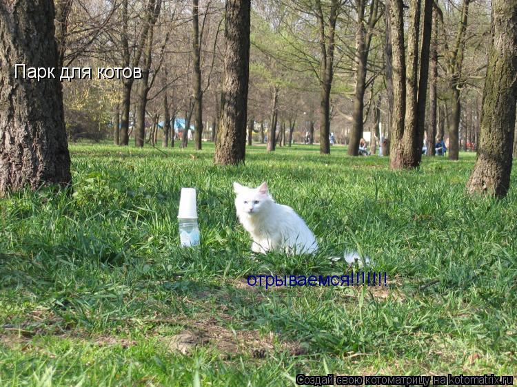Котоматрица: Парк для котов отрываемся!!!!!!!