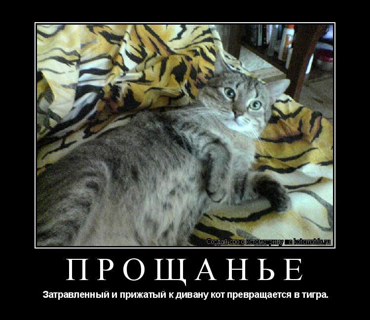 Котоматрица: ПРОЩАНЬЕ  Затравленный и прижатый к дивану кот превращается в тигра.