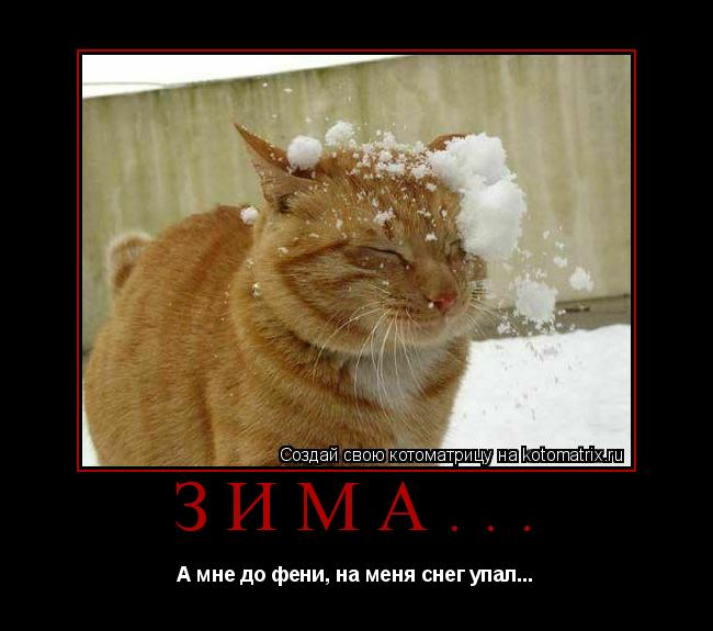 Котоматрица: Зима... А мне до фени, на меня снег упал...