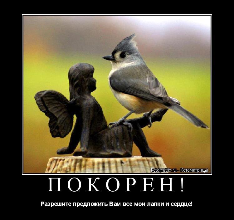 Котоматрица: Покорен! Разрешите предложить Вам все мои лапки и сердце!
