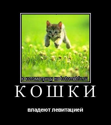 Котоматрица: кошки владеют левитацией