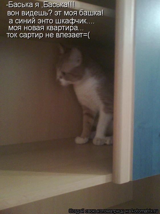 Котоматрица: -Баська я ,Баська!!! вон видешь? эт моя башка! а синий энто шкафчик....  моя новая квартира...  ток сартир не влезает=(