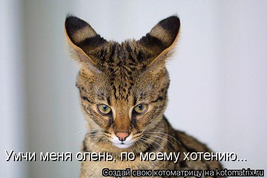 Котоматрица: Умчи меня олень, по моему хотению...
