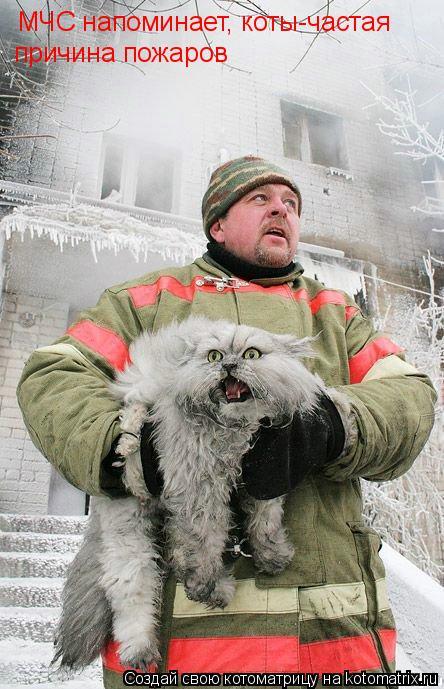 Котоматрица: причина пожаров МЧС напоминает, коты-частая