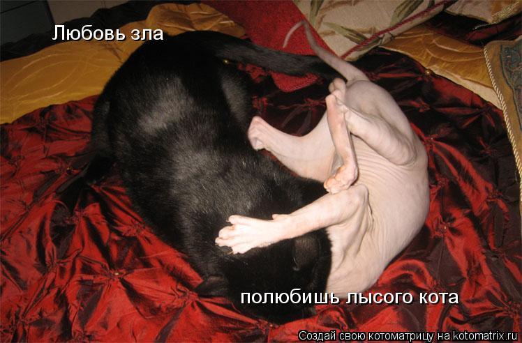 Котоматрица: Любовь зла  полюбишь лысого кота