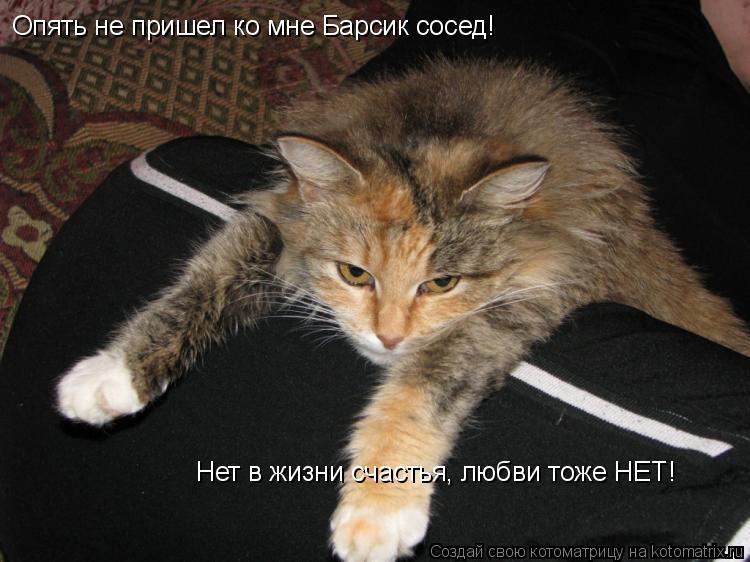 Котоматрица: Опять не пришел ко мне Барсик сосед! Нет в жизни счастья, любви тоже НЕТ!