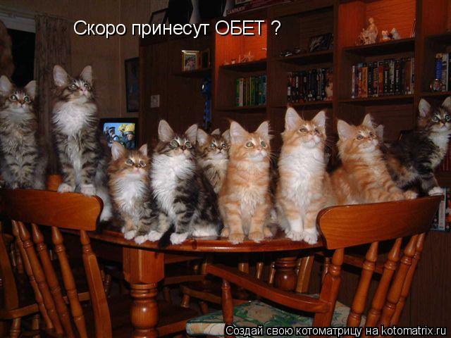 Котоматрица: Скоро принесут ОБЕТ ?