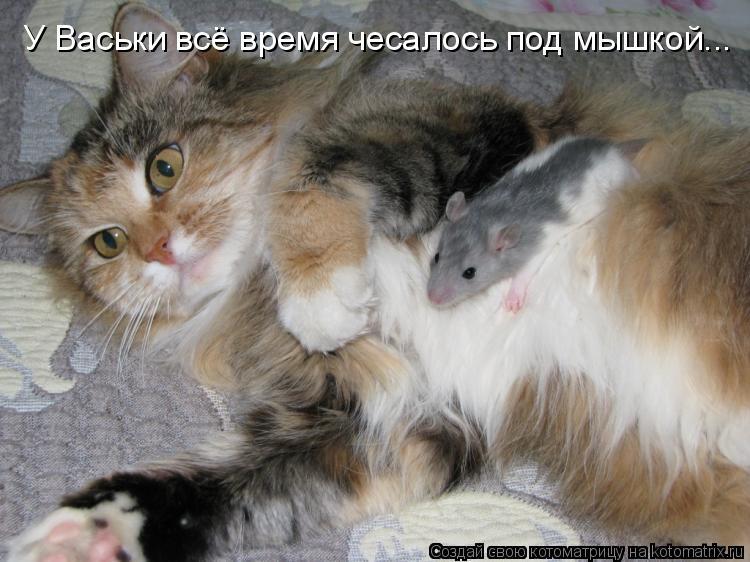 Котоматрица: У Васьки всё время чесалось под мышкой...