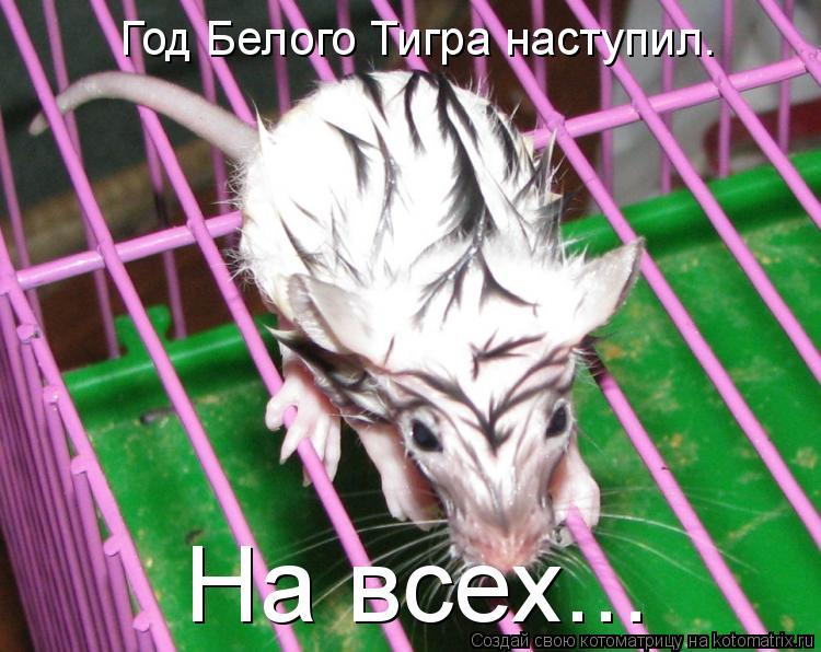 Котоматрица: Год Белого Тигра наступил. На всех...