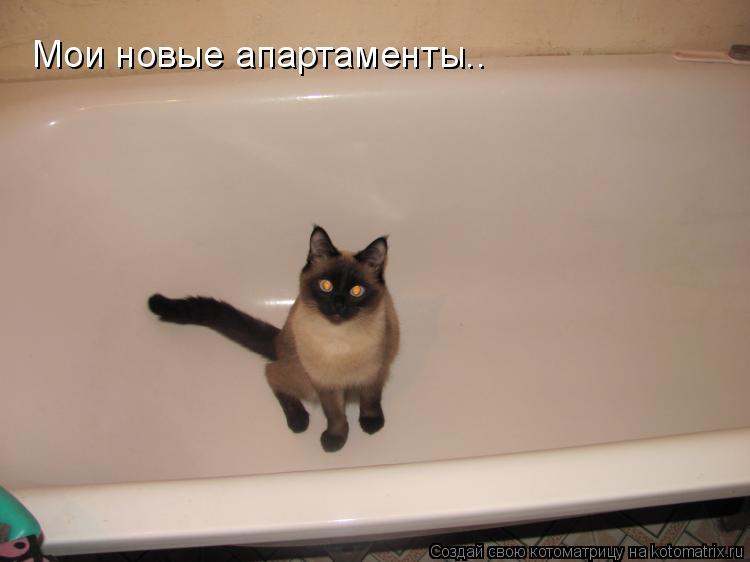 Котоматрица: Мои новые апартаменты..