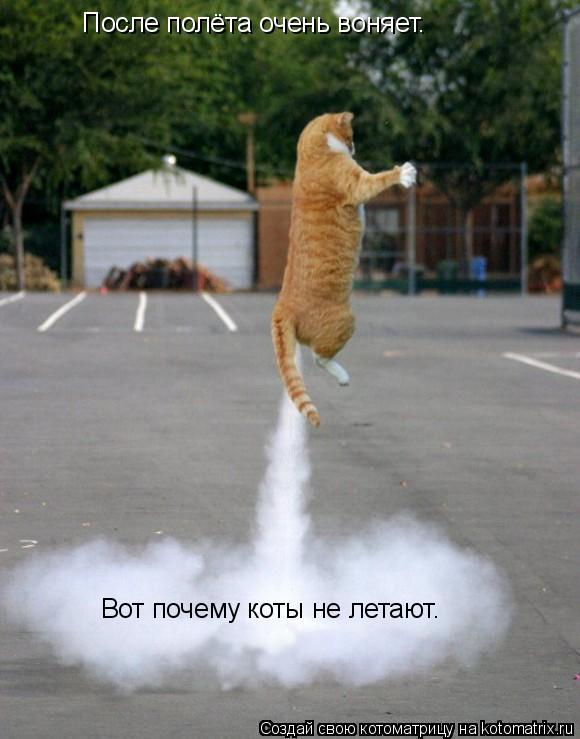Котоматрица: Вот почему коты не летают. После полёта очень воняет.