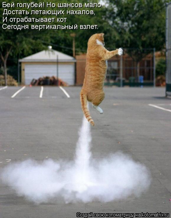 Котоматрица: Бей голубей! Но шансов мало Достать летающих нахалов, И отрабатывает кот Сегодня вертикальный взлет.