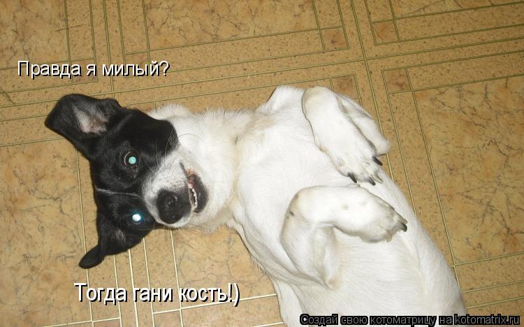Котоматрица: Правда я милый?  Тогда гани кость!)
