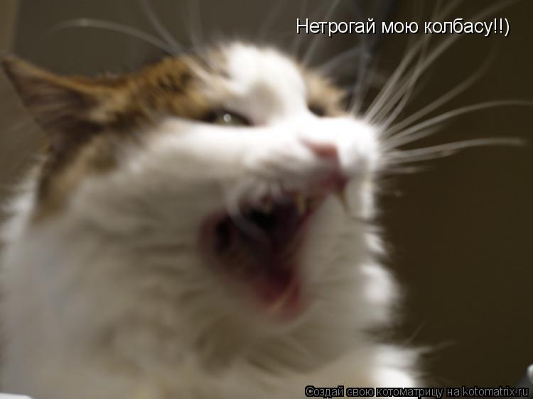 Котоматрица: Нетрогай мою колбасу!!)