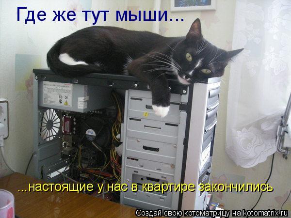 Котоматрица: Где же тут мыши... ...настоящие у нас в квартире закончились