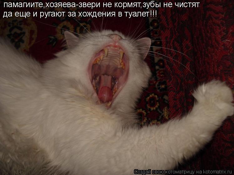 Котоматрица: памагиите,хозяева-звери не кормят,зубы не чистят да еще и ругают за хождения в туалет!!!