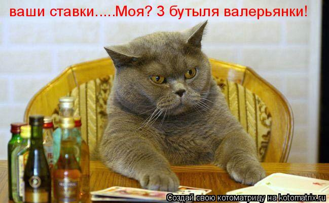Котоматрица: ваши ставки.....Моя? 3 бутыля валерьянки!