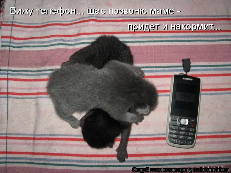 Котоматрица: Вижу телефон... щас позвоню маме -  придет и накормит...