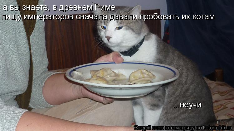 Котоматрица: а вы знаете, в древнем Риме пищу императоров сначала давали пробовать их котам ...неучи